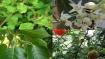 ದೈವ ಶಕ್ತಿಯನ್ನು ಹೊಂದಿರುವ ಗಿಡ-ಮರಗಳನ್ನು ಪೂಜಿಸಿ ನಿಮ್ಮ ಬಯಕೆಗಳನ್ನು ಈಡೇರಿಸಿಕೊಳ್ಳಿ