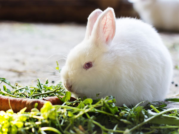 Easy Care Tips For Your Pet Rabbit