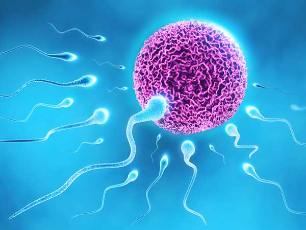 What Men Don't Know About Sperm Cells