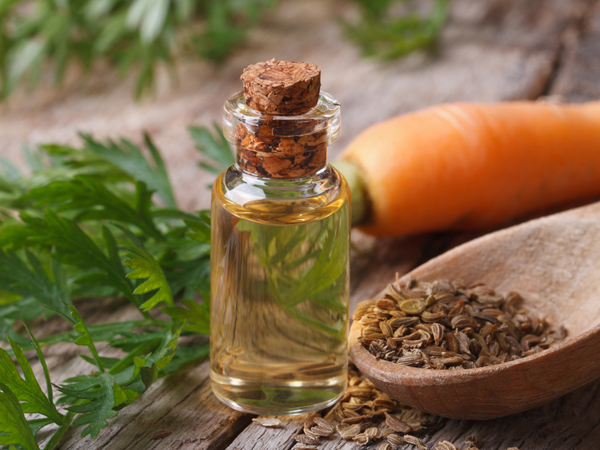 Top Health Benefits of Carrot Seed Essential Oil