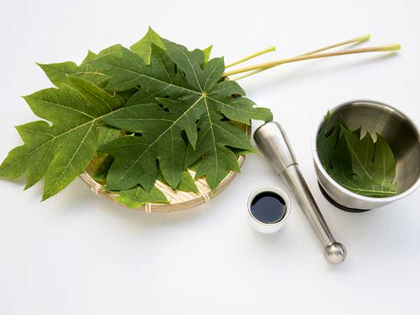 This One Natural Leaf Helps Cure Dengue