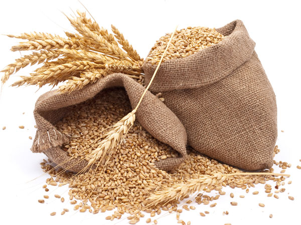 Importance Of Wheat For Kids
