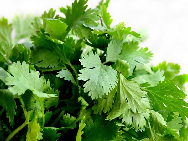 Best Ways Apply Use Coriander Leaves Skin Care