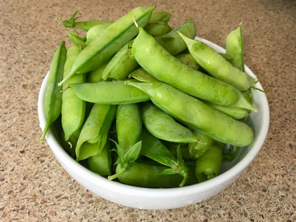 Green Soy Bean Benefits