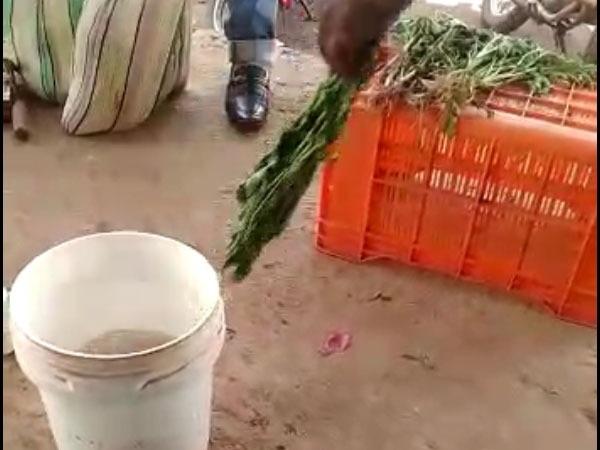 ಬಾಡಿದ ಸೊಪ್ಪನ್ನು ತಾಜಾವಾಗಿಸಲು ರಾಸಾಯನಿಕ ಬಳಕೆ:  ವೈರಲ್ ವೀಡಿಯೋ