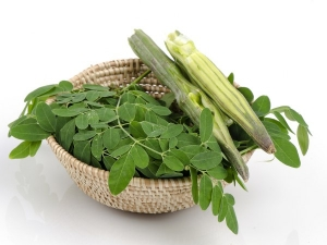Fight Diabetes High Cholesterol With Drumstick Leaves