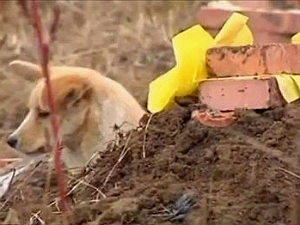 1127 China Faithful Dog Stays At Masters Grave Aid0135.html
