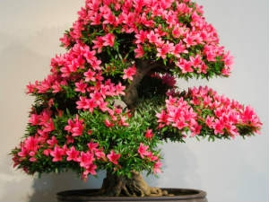 Bonsai Gardening Tips Aid