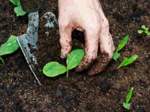 How Make Rich Soil