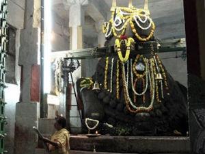 Special Sankranti 2013 Basavanagudi
