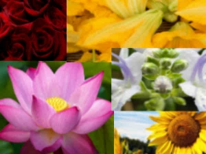 Edible Flowers That Are Nutritious