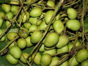 Midi Uppinakayi Recipe