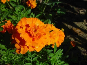 Top 10 Plants For A Container Garden
