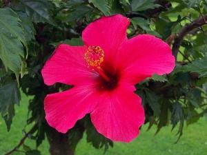 Types Hibiscus Flowers Garden