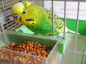 Taking Care Pet Birds During Winter Season