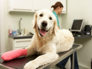 Take Care Injured Dog Guide