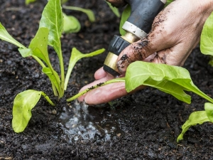 Transplanting Tips Your Garden