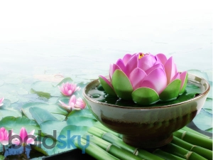 Home Lotus Plant Care Tips
