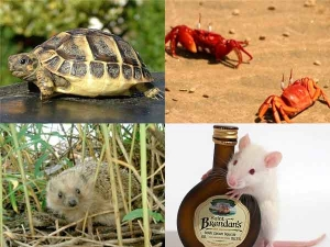 5 Unusual Pets Keep 008654