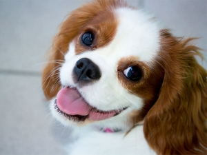 Simple Rules To Keep Your Dog Hale And Healthy