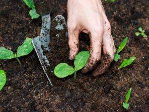 Efficient Ways Manure Vegetable Garden