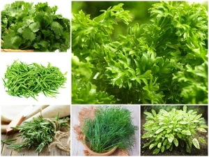 Best Healing Herbs You Can Eat Everyday