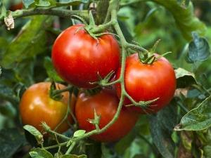 Easiest Vegetables Grow Your Garden