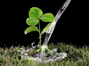 Gardening Tips Wet Soil