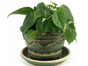 Tips Keep Plants Alive On Vacation
