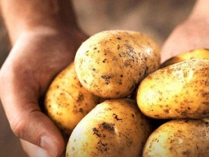 Beauty Benefits Potato