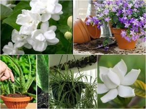 Plants Keep Your Bedroom Better Sleep