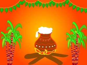Sankranti Festival Foods Which Should Boost Your Health
