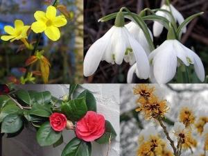 Flower Gardening Tips Beginners