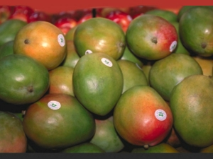 What Are The Benefits Eating Mangoes