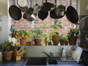 Tips Decorating Your Kitchen With Plants