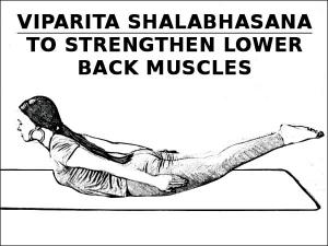 Viparita Shalabhasana Strengthen Lower Back Muscles