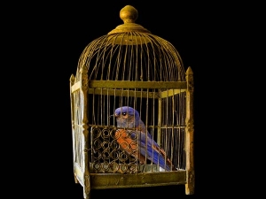 Did You Know That Caging Birds Leads Financial Loss