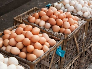 Shocking Facts About Eggs That You Need Know