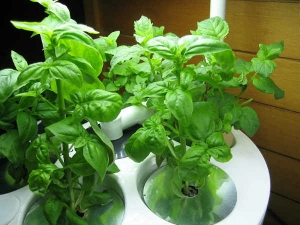 Best Medicinal Plants Grow At Home