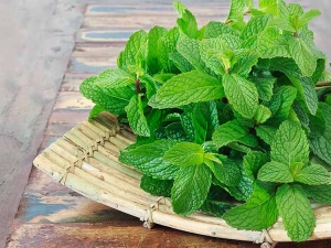 How Use Pudina Mint Leaves Weight Loss