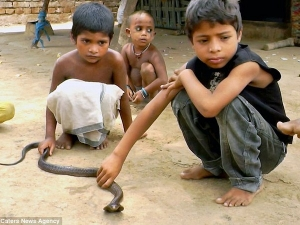 Snakes Don T Scare Residents Seven Villages West Bengal