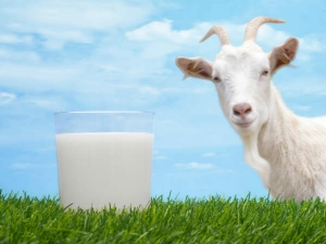 Is Goat Milk Good Health
