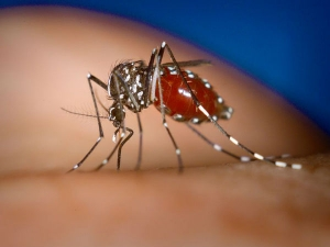 Health Tips Given Doctors When You Have Dengue