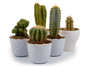 How Add Cactus Your Skin Care Routine