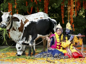 Cow Mantra Rituals Mantra Worship Cows Cow Puja