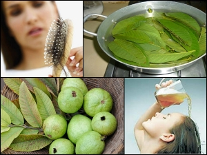 How Stop Hair Loss With Guava Leaves At Home 20 Minutes