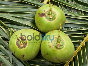 Reasons Why You Should Drink Coconut Water Through The Year