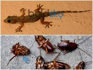 Simple Home Remedies Get Rid Lizards Cockroaches