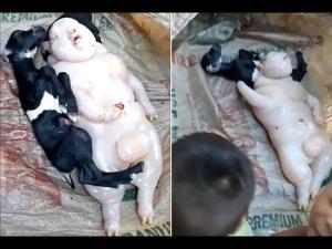 Goat Gave Birth Half Pig Half Human