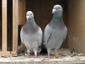 These Birds Animals Should Not Enter Your House As Per Astrology